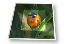 Jquery辅助图片裁剪插件jcrop简介,一款web图片裁剪插件